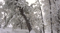 Woman Nordic Walking in Beautiful Snowy Forest Stock Footage