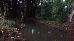 Clear Stream Jungle Stock Footage