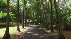 Walk In A Tropical Park Stock Footage