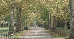 Alley in the park with fallen leaves of autumn trees Stock Footage