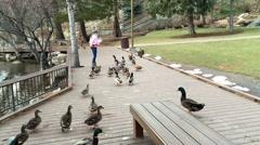 Girl feeding ducks from a promenade HD  Stock Footage