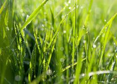 Dewdrops on green grass Stock Photos