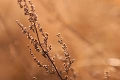 Dry weed in sunlight Stock Photos