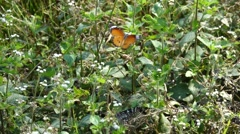 Beautiful Orange Butterfly in Slow Motion Nature Background Stock Footage
