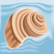 Sea shell isolated Stock Illustration