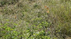 Butterfly Flying in Slow Motion 3 in a Row Stock Footage