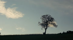Sillhouete with big beautifull tree and boy near Stock Footage