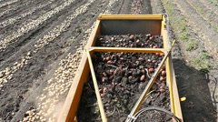 Harvesting potatoes slow motion Stock Footage