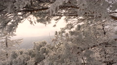Winter Forest Snow Branches of Trees in Frost Sunlight Stock Footage