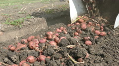 Harvesting potatoes with machinery Stock Footage