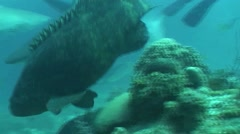 Dangerous Shark Underwater Video Cuba Caribbean Sea Stock Footage