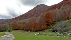 Forest in autumn in the national park of Abruzzo in Italy. Stock Footage