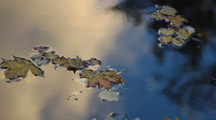Autumn landscape. Autumn leaves floating on water. Stock Footage