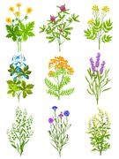 Collection Of Wild Herbs Stock Illustration