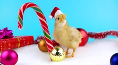 Cute gold young rooster with Christmas decoration and sugar candy cane Stock Footage
