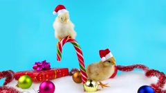Two Santa helpers, young roosters, symbol of new year 2017 Stock Footage