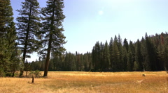 Kings Canyon 06 Indian Basin Grove Meadow Dolly 4K Stock Footage
