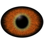 Lizard eye.  Isolated brown elliptic eye. Big eye with striped iris Stock Illustration