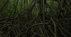 View of mangrove forest along the river Stock Footage