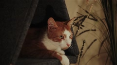 Cat is sitting in the house Stock Footage
