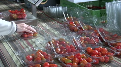 Employee checks a box of tomatoes Stock Footage