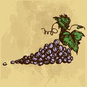 Grapes hand drawing Stock Illustration
