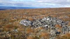 Rock ptarmigan in Pallas-Yllästunturi National Park Arkistovideo