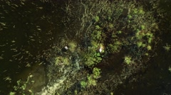 Islet with swans nesting at a lake, slowly receding vertical aerial shot Stock Footage