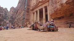 Bedouin camel rests near the treasury Al Khazneh Stock Footage