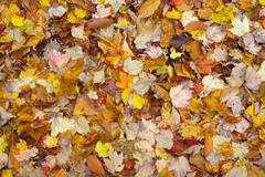Ground of leaves autumn background colourful season pattern Stock Photos