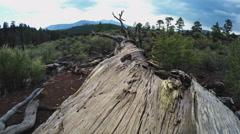 Dead Tree Lying On Ground Close Up- Flagstaff Arizona Stock Footage