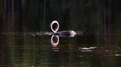 Insects swarming around an attachment loop at a calm lake, handheld shot Stock Footage