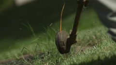 Gas Weed Eater Trimmer Edging Grass in Slow Motion Stock Footage