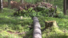 Fallen tree log in the forest Stock Footage