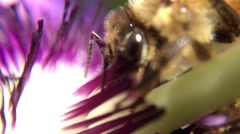 Bee and Passion Flower 2 Stock Footage