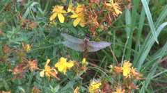 Dew covered dragonfly on plant Stock Footage