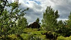 Tundra landscape - trees and a big rock on a background picturesque sky. Stock Footage