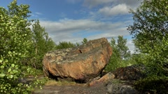 Landscape tundra - big stone among the swaying trees from the wind. Stock Footage