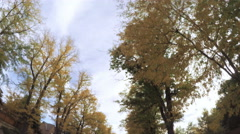 Driving on residential street underneath canopy of large trees Stock Footage