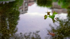 Leaf in the puddle of water. Autumn. Rain. Stock Footage