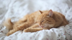 Cute ginger cat lying in bed. Fluffy pet looks sleepy. Cozy home background Stock Footage