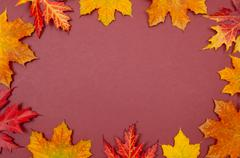 Claret background surrounded by autumn colorful fallen maple leaves Stock Photos