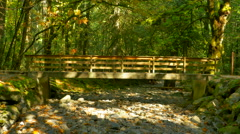 4K Park Bridge, Central Landscape Park, Maple Tree Forest at Fall Stock Footage