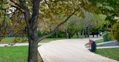 Spreading chestnut tree in the city Park, wooden walkways Stock Footage
