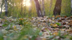 Young man in running shoes runs on fallen autumn leaves through the sun in the Stock Footage