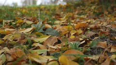 Yellow leaves lie on the green grass lawn autumn landscape nature Stock Footage