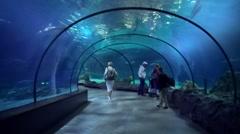 Oceanie aquarium in Zoo Blijdorp in Rotterdam (Holland). Stock Footage