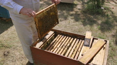 Beekeeper takes out the frame from the hive studying it carefully Stock Footage
