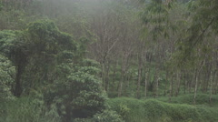 Beautiful nature of Thailand jungle rain forest with tropical plants and Stock Footage