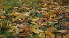 Yellow leaves lie on the green grass lawn autumn nature landscape Stock Footage